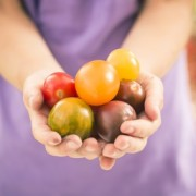 Germany, girl holding heirloom tomatoes